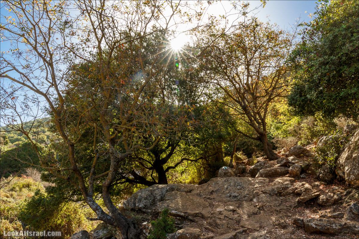 Верхний нахаль Кзив   LookAtIsrael.com - Фото путешествия по Израилю