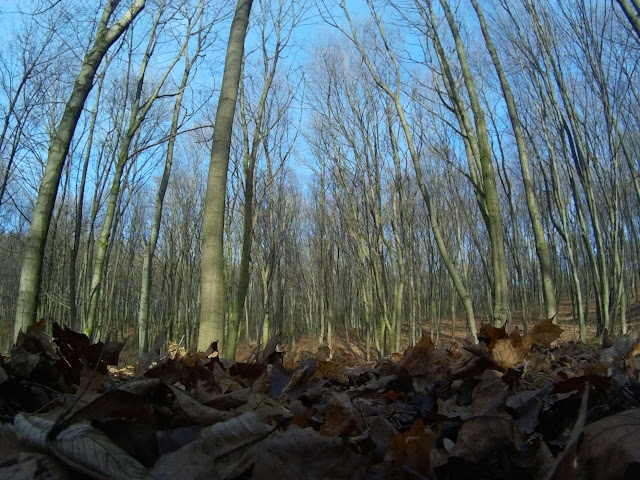 гарний ліс