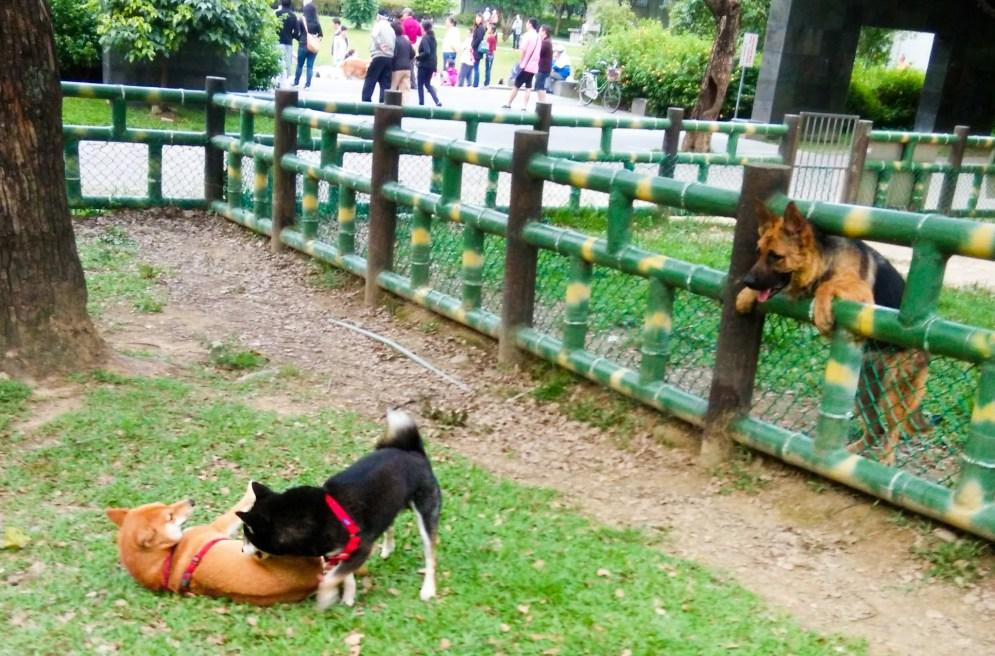 全國寵物運動公園