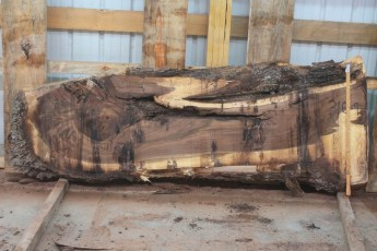 "Walnut 316-9  Length 8' 6"", Max Width (inches) 26 Min Width (inches) 17 Thickness 10/4  Notes : Kiln Dried"