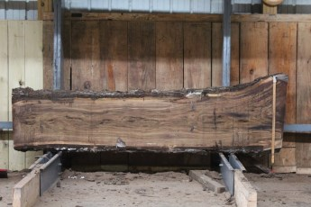 "581  Walnut -8 10/4 x 26"" x  19"" Wide x  8'  Long"