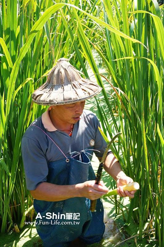 桃米休閒農業區15