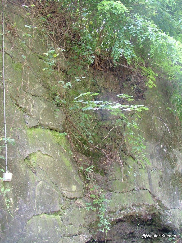 Loncin 2008 - DSCF7432.JPG