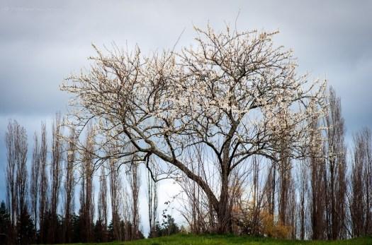 나무 사진 20140319 Matt Wachowski
