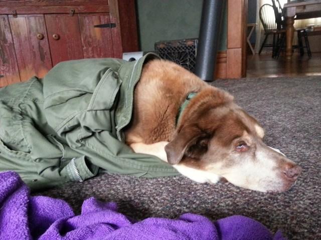 Mabel in a coat