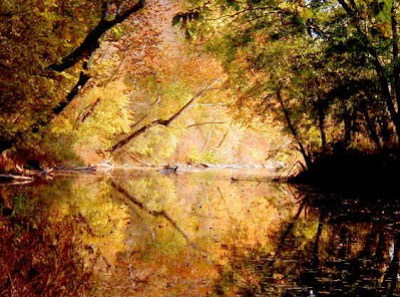 The glory of fall at the river