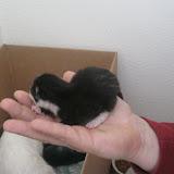 katten - 2011-02-26%2B12-09-16%2B-%2BIMG_0253.JPG