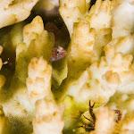 白化サンゴとベニハゼ_S.jpg