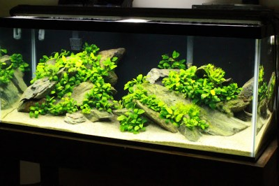 Tharsis' 75 gallon - The Rhode Island Chapter - The ...
