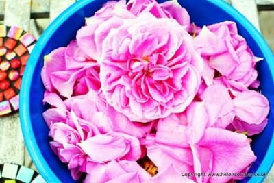 3 rose petals 3
