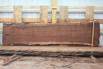 """Walnut 315-6  Length 11' 6"""", Max Width (inches) 34 Min Width (inches) 27 Thickness 10/4  Notes : Kiln Dried"""