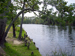 sam-houston-jones-state-park-lake-charles-la-2009 6-23-2009 2-52-22 PM 7-3-2009 10-52-06 AM.JPG