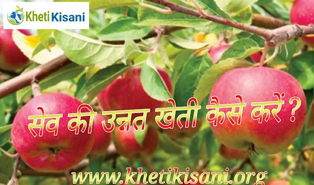 सेव की खेती वैज्ञानिक तरीके से कैसे करें हिंदी में पूरी जानकारी पढ़ें Apple farming in hindi