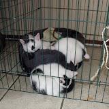 katten - 2010-06-26%2B16-28-51%2B-%2BDSCF1314.JPG