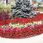 images-Seasonal Color-flowers_13.jpg