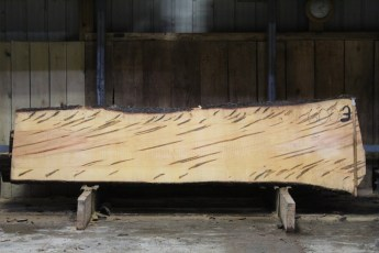 "600  Ambrosia Maple - 3 8/4x 33"" x 25"" Wide x  10'  Long"