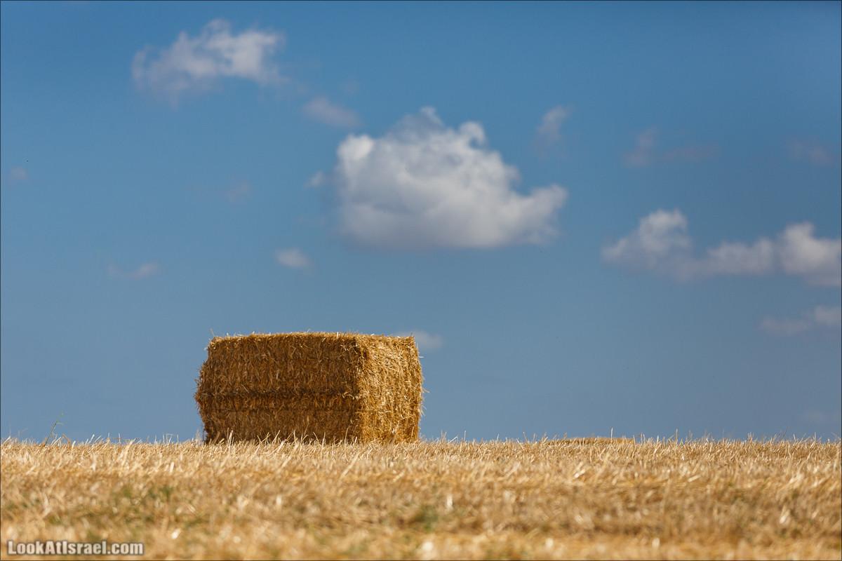 Одно полевое фото