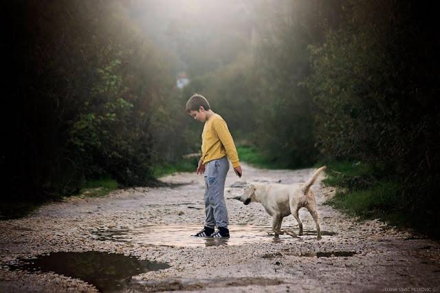 Ребенок просит собаку