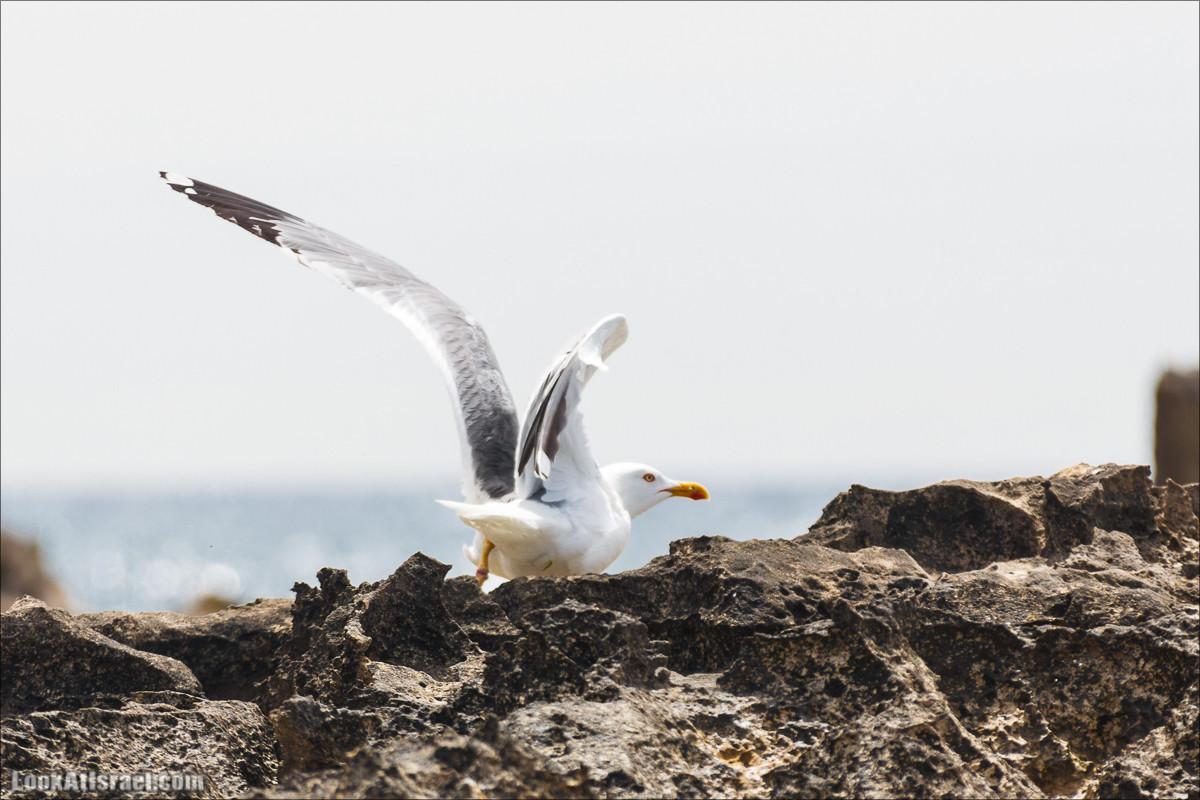 Птичий остров в Средиземном море, Израиль | LookAtIsrael.com - Фото путешествия по Израилю и не только...