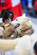 Iditarod2015_0141.JPG