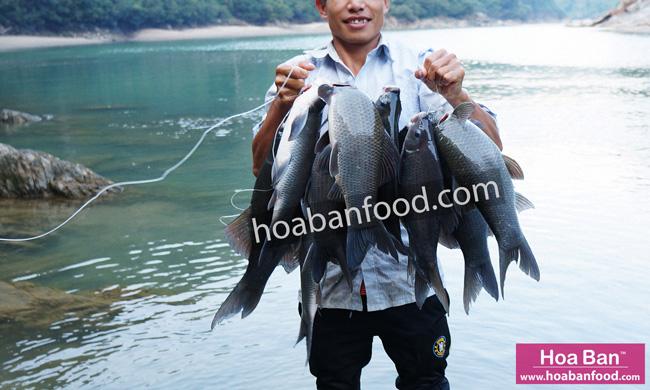 Cá Dầm Xanh Sông Đà 1