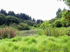 Sector Oriental Humedal El Cortijo