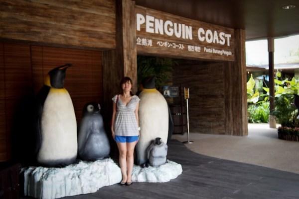Singapore Penguin Coast