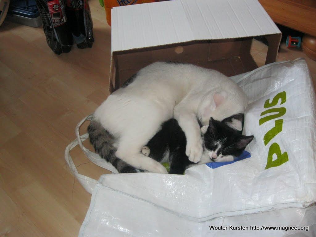 katten - 2011-04-16%2B19-07-54%2B-%2BIMG_0414.JPG
