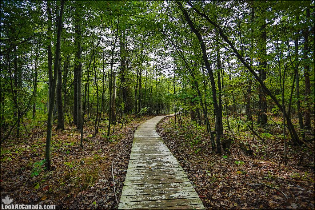 LookAtCanada.com / Дождливые леса Оттавы и канадская радуга | LookAtIsrael.com - Фотографии Израиля и не только...