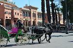 Marrakech par le magicien mentaliste Xavier Nicolas Avril 2012 (151).JPG
