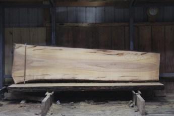 "605 Ambrosia Maple - 8 8/4x 33"" x 25"" Wide x  10'  Long"
