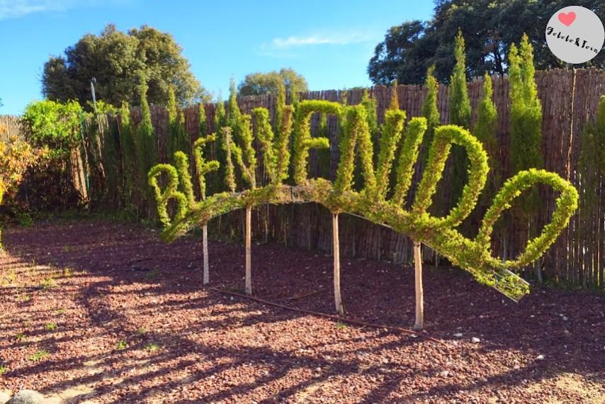 bosque-encantado-san-martin-de-valdeiglesias-sierra-madrid-jardín-botánico