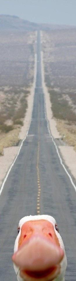 20120715_Duck_Road