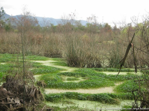 Reserva del Humedal La Conejera
