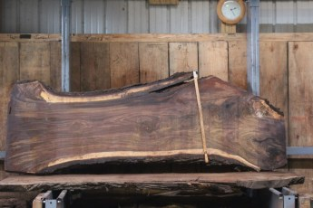 "551  Walnut -8 10/4 x  32"" x  24"" Wide x 8'  Long"