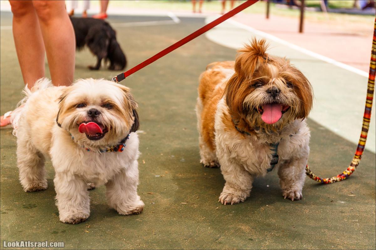 День собак в Тель-Авиве - Клавив | Klaviv - Dogs day in Tel-Aviv | כלביב - יום של כלבים בצל אביב | LookAtIsrael.com - Фото путешествия по Израилю
