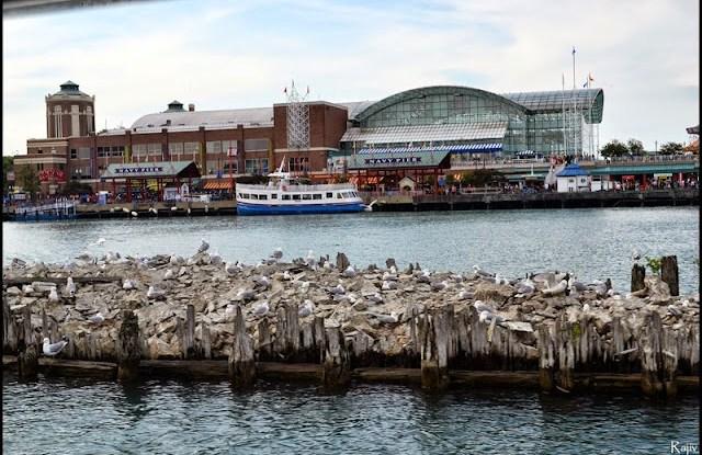 Navy Pier blog