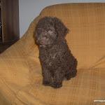 perros  con Liliana la americana y su hija y cachorros 033.jpg