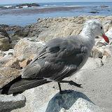 Montery Bay Aquarium, USA - 207779737_ced326acbd.jpg