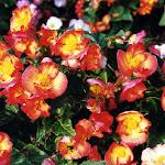 images-Seasonal Color-seasonal_b10.jpg