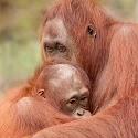 Mum am I a ginger_Carrie Eva.jpg