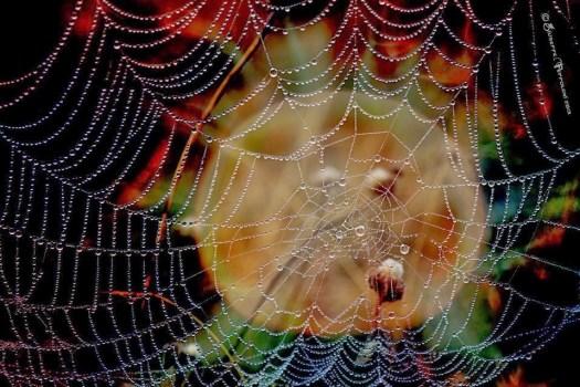 거미줄의 비밀,'구명줄'