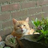 katten - DSCF2047.JPG