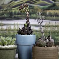 3plants.jpg