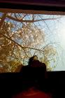 destilo flamenco 28_198S_Scamardi_Bulerias2012.jpg
