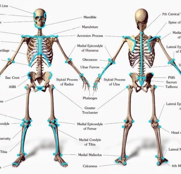 Landmarks-of-the-Human-Body