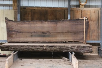 "581  Walnut -5 10/4 x 28"" x  26"" Wide x  8'  Long"