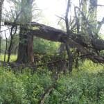 Primitive Camping Trip