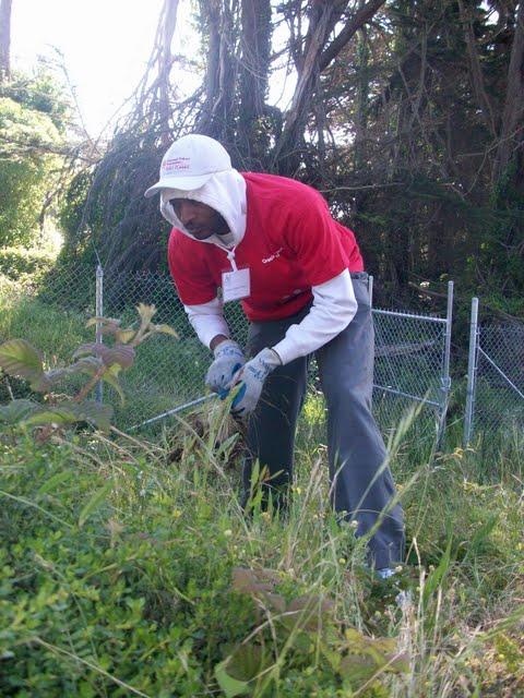 IVLP 2010 - Volunteer Work at Presidio Trust - 100_1404.JPG