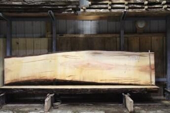 "599  Ambrosia Maple -4 10/4x 33"" x 24"" Wide x  12'  Long"